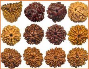 14-types-rudrakshas