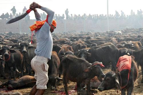 animal-killing